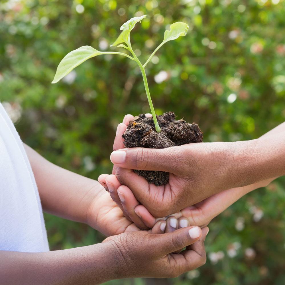 hands-giving-plant.jpg