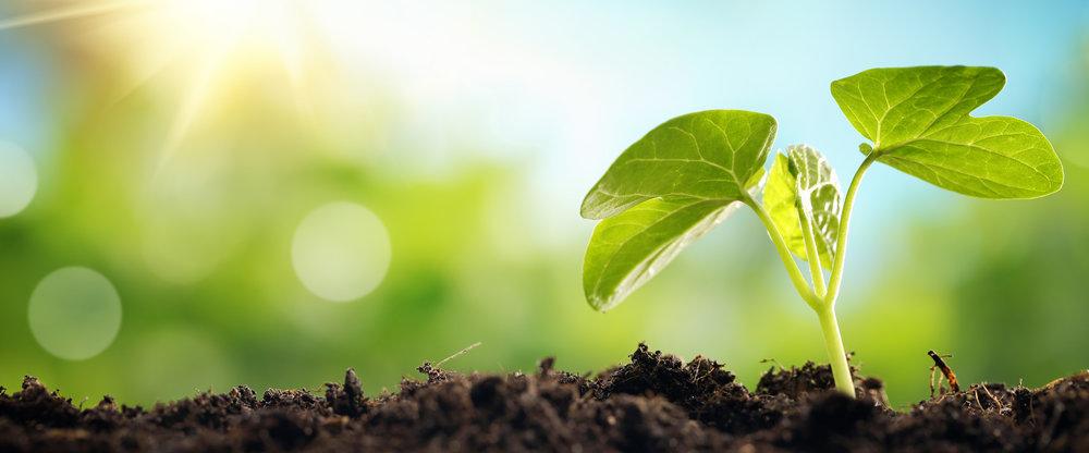 leafgrowing.jpg