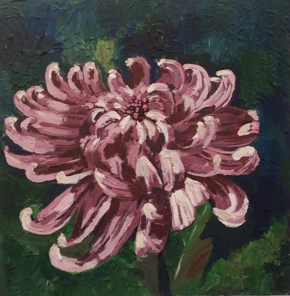 crysanthumum