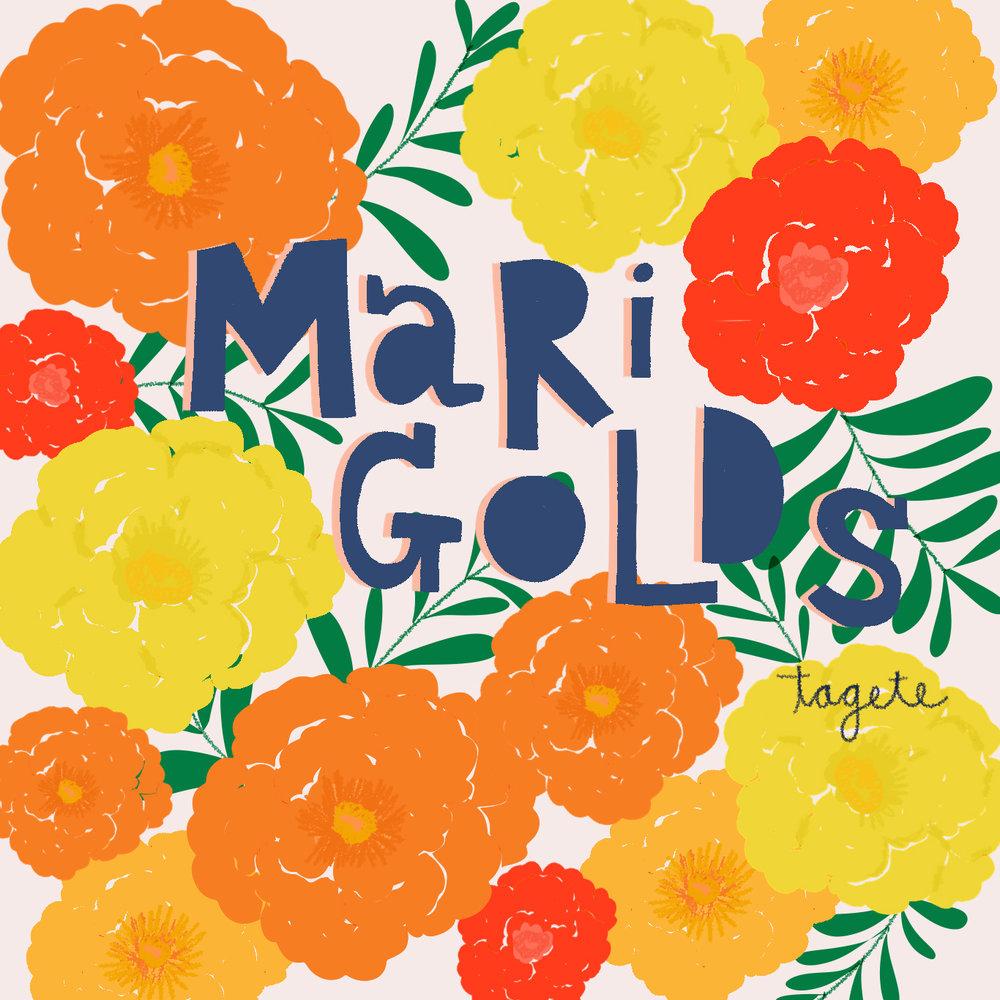 jami darwin marigolds.jpg