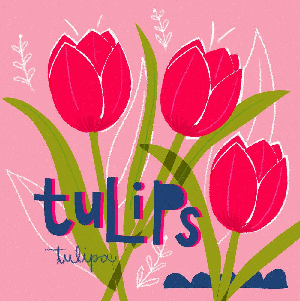 jami darwin tulips.jpg