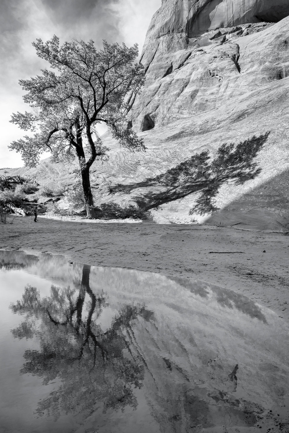 Tree, shadow, and reflection.  Middle Earth Waterfall, near Moab, UT.
