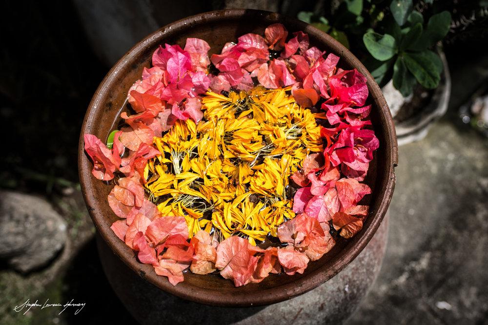 Bali flower beauty (1 of 1).jpg