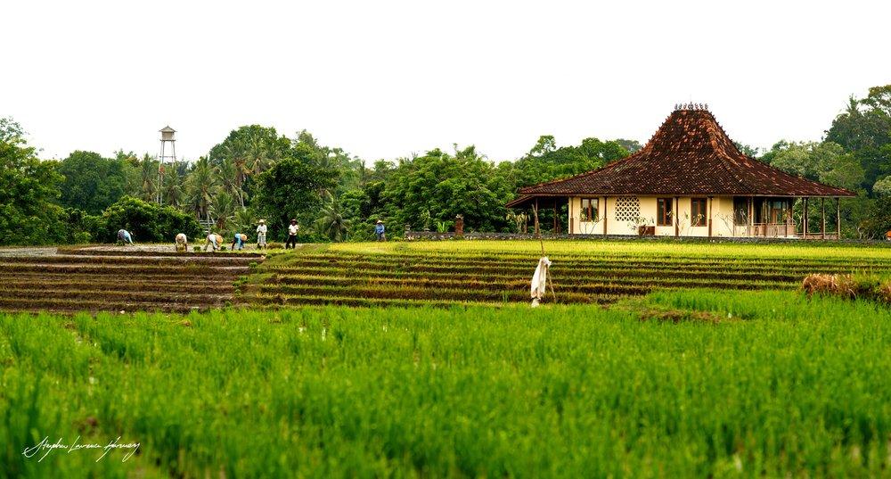 Bali rice field workers (1 of 1) copy.jpg