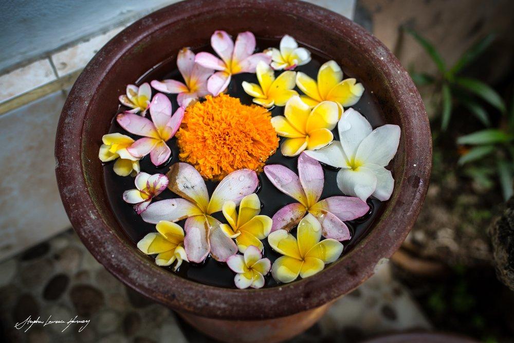 Bali flower beauty 3 (1 of 1) copy.jpg