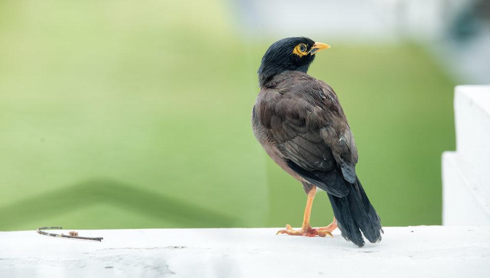 Bird thinking Oi Oi  (1 of 1).jpg