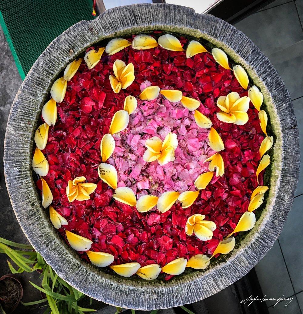 Bali Flora (1 of 1) copy.jpg