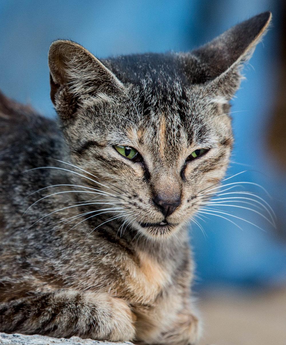 Cat Chantik 2 (1 of 1).jpg