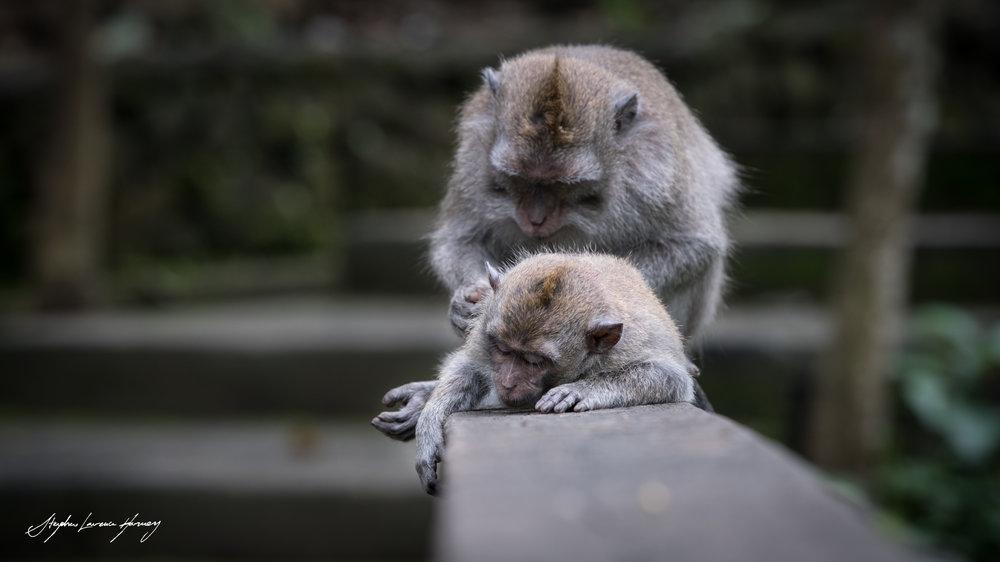 Monkey Care (1 of 1).jpg