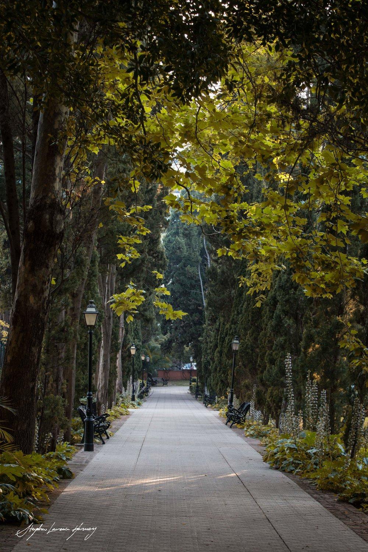 Marbella Park lane 2 (1 of 1) copy.jpg