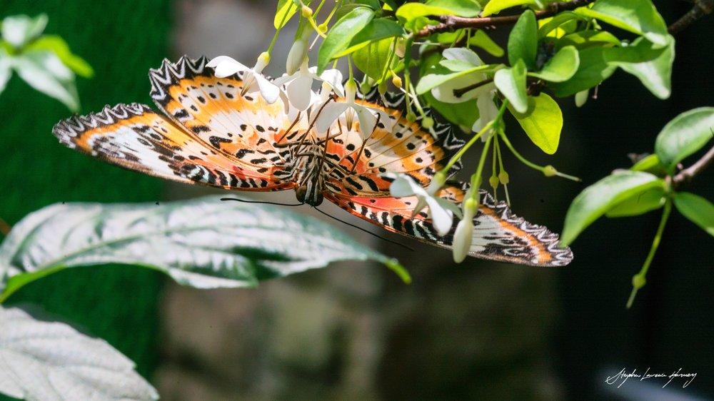 butterfly JAm (1 of 1) copy.jpg