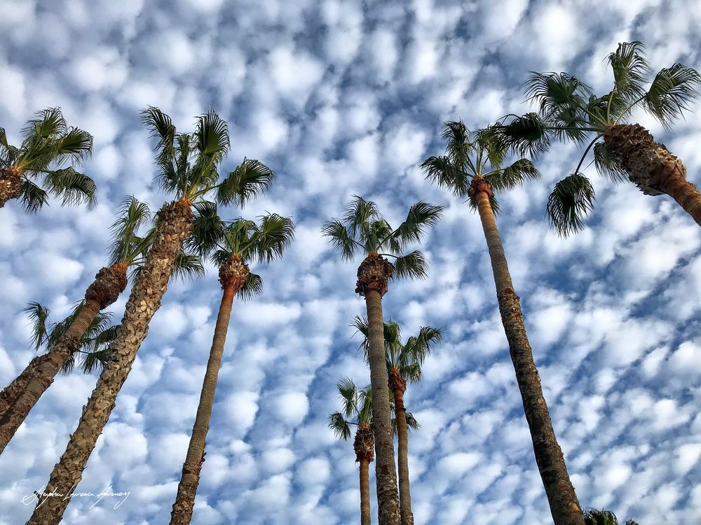 Malibu Trees (1 of 1) copy.jpg