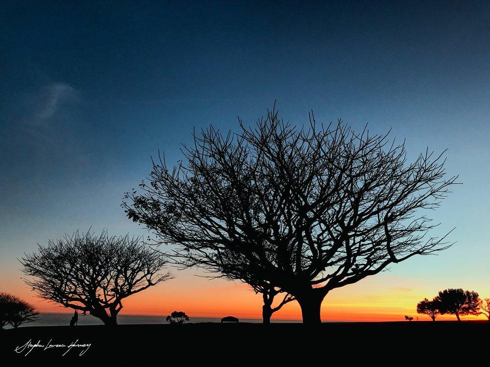 Malibu Tree shadows 3 (1 of 1) copy.jpg