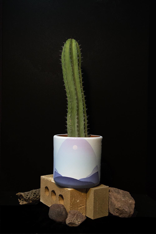 Cactus plant sacramento