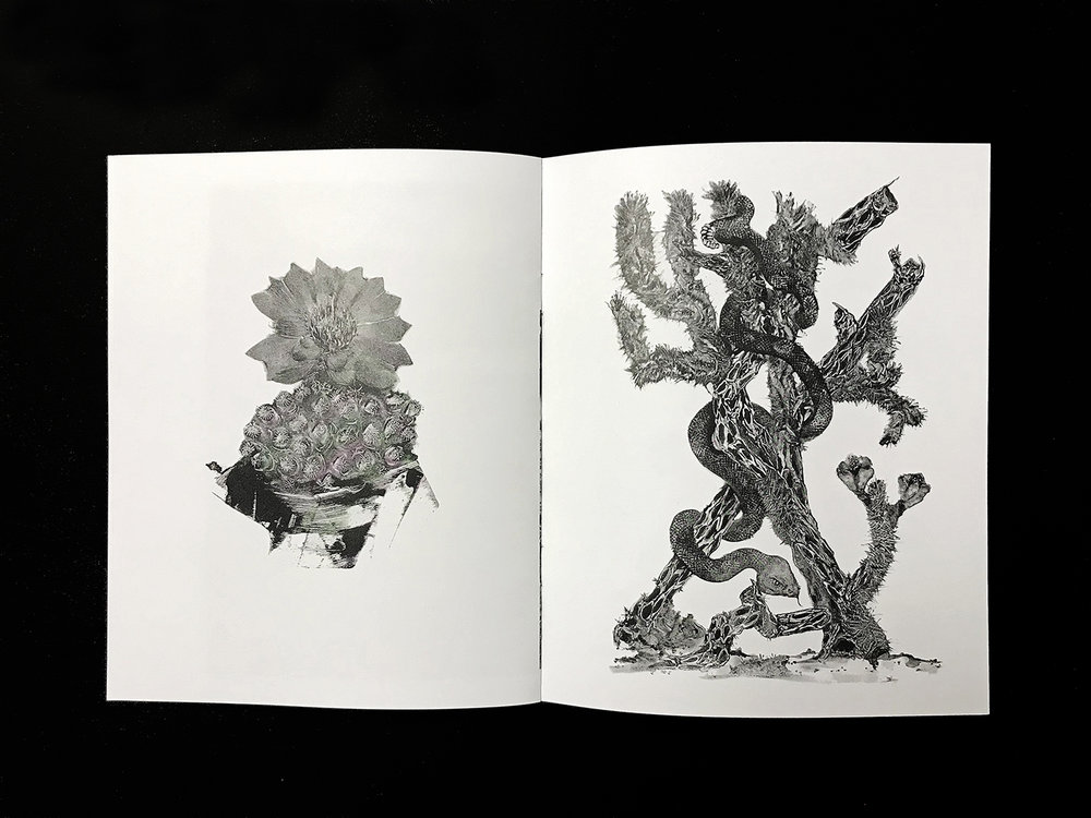art zine by Public Land in Sacramento