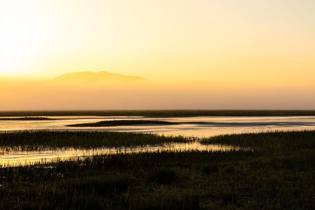 Tomales Bay Ecological Reserve, early morning beauty.