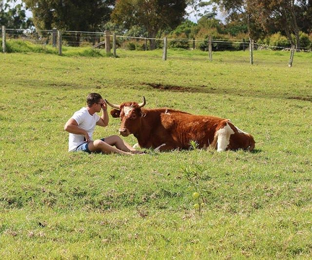 Relax amongst luxurious tranquility at Curra Homestead Maleny where you'll find a variety of friendly birds and animals.  #sunshinecoast #maleny #airbnb #sunshinecoasthinterland #animals #visitsunshinecoast #vacation