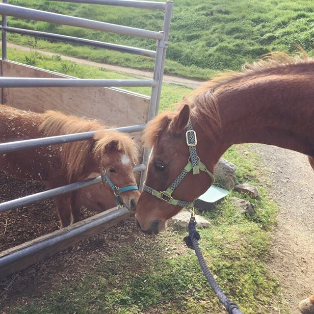 Our two resident rescues Uno + Phoenix meet 🤩 #rescuehorse #horsesofinstagram