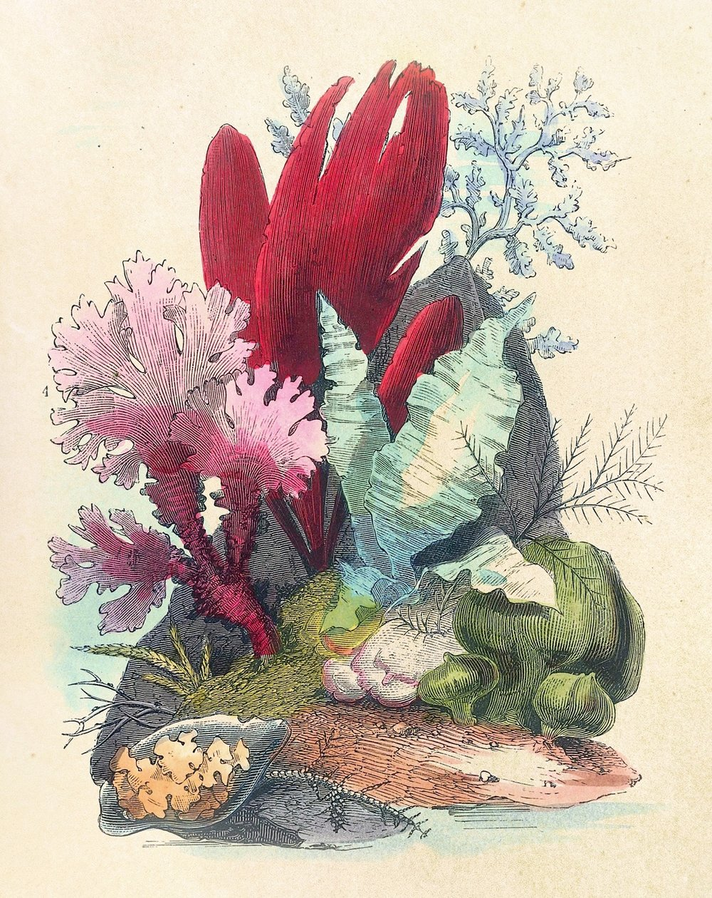 Ocean Gardens - Ocean Gardens : the history of the marine aquarium and the best methods now adopted for its establishment and preservation. Henry Noel Humphreys, 1857, cat. Ca 9.A combination of practical advice and beautiful illustrations of aquariums and their contents. This first edition from 1857 is in need of repair and rebinding, and is eligible for sponsorship through the library's Adopt-a-Book scheme.