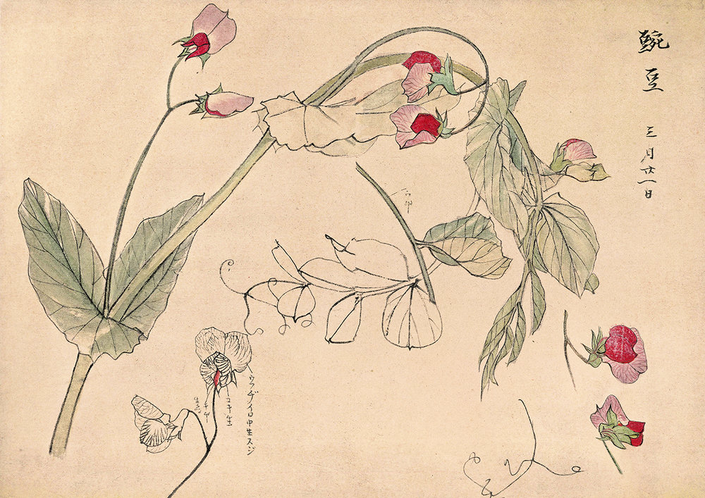 Botanical Study - Drawings by Japanese Artists - print WEB.jpg