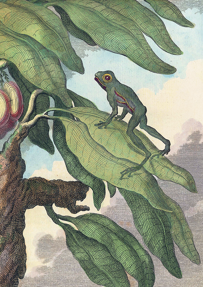 Tree Frog - Histoire des Animaux - print WEB.jpg