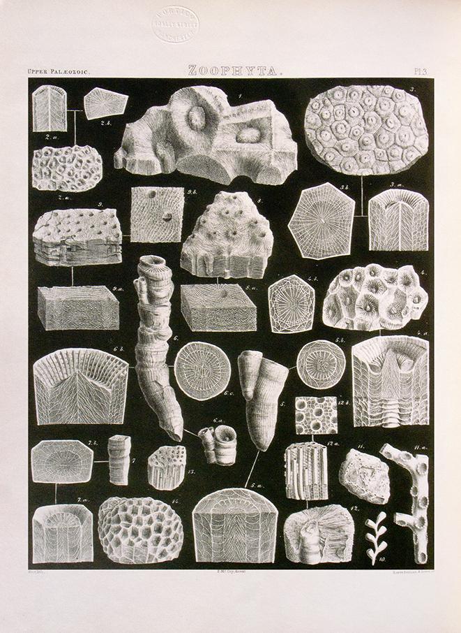 Zoophyta - British Paleozoic Rocks & Fossils - print WEB.jpg