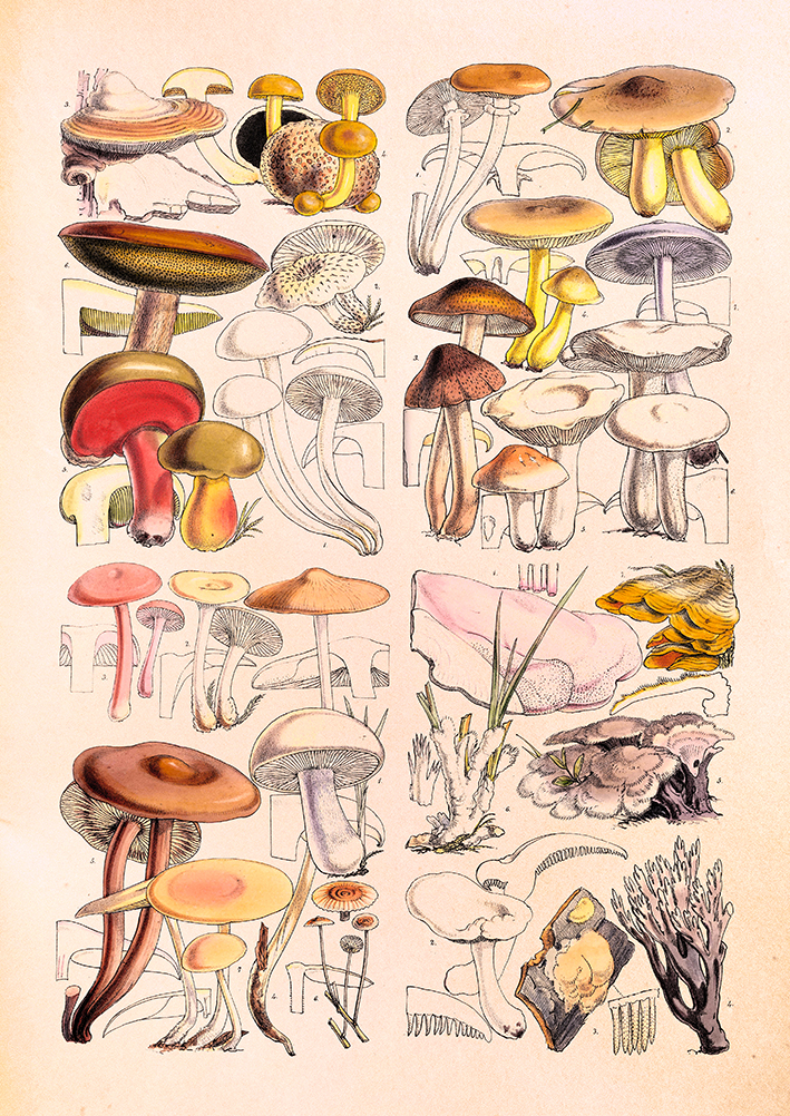 Mushrooms - Outlines of British Fungology - print WEB.jpg