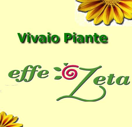Logo Vivaio Effezeta.jpg