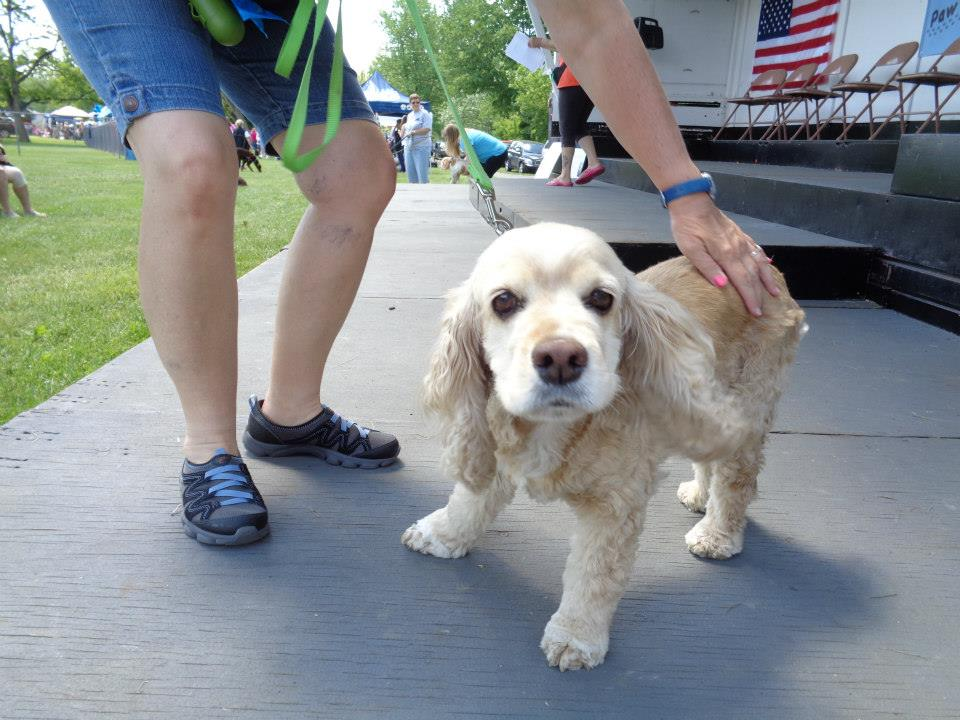 Pets & Canal View -