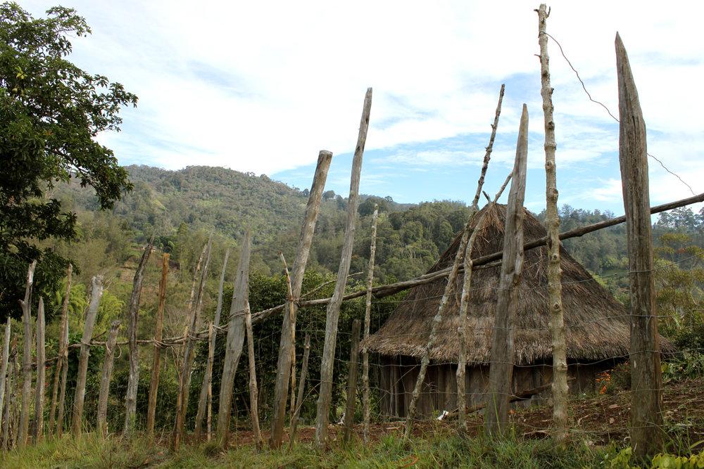 PapuaNewGuinea4.JPG