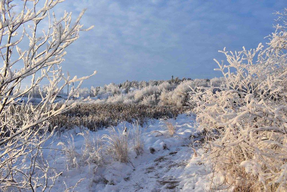 snowy trail_web.jpg