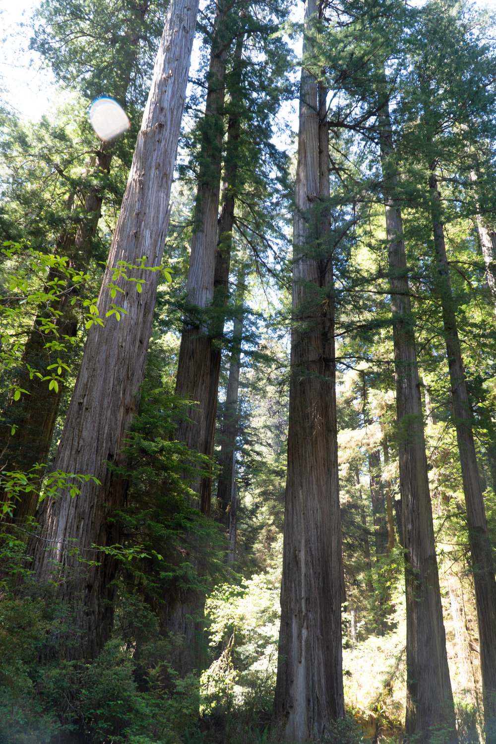 A scenic drive on the Howland Hill Road, Jedediah Redwoods State and National Park
