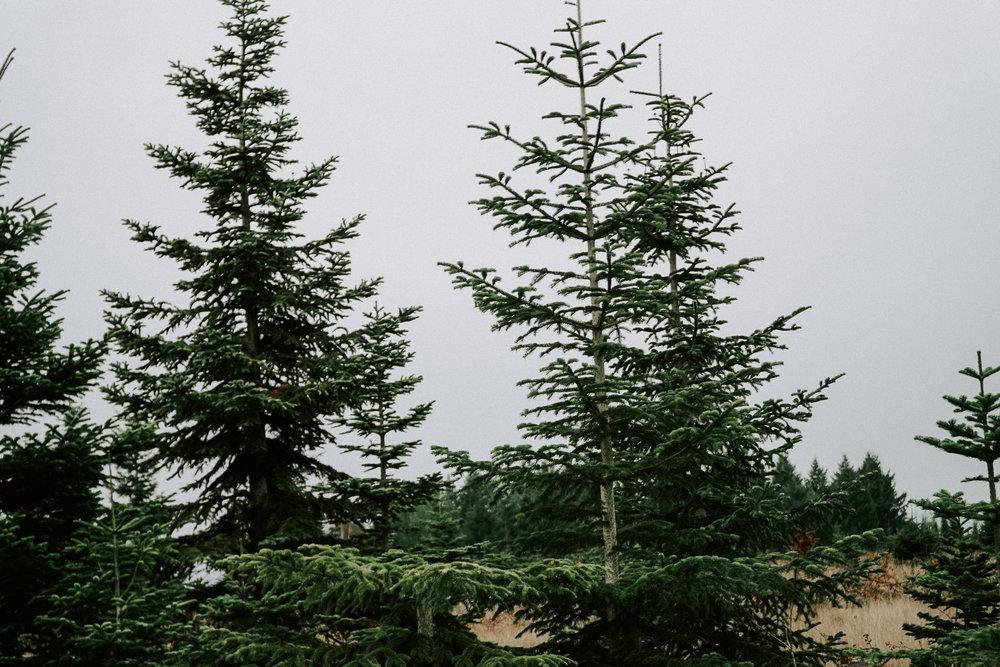 Portland Oregon Tree Farm Wedding Photography 24