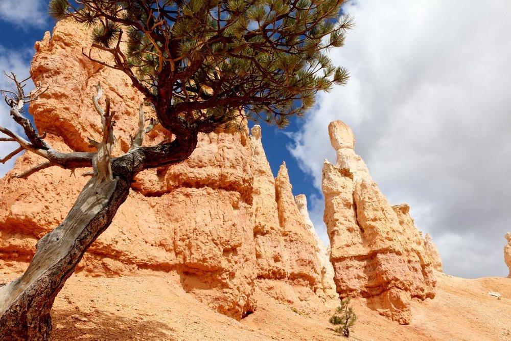 Peekaboo-Queens Garden Loop_Bryce Canyon National Park _Anchor and Pine Collective