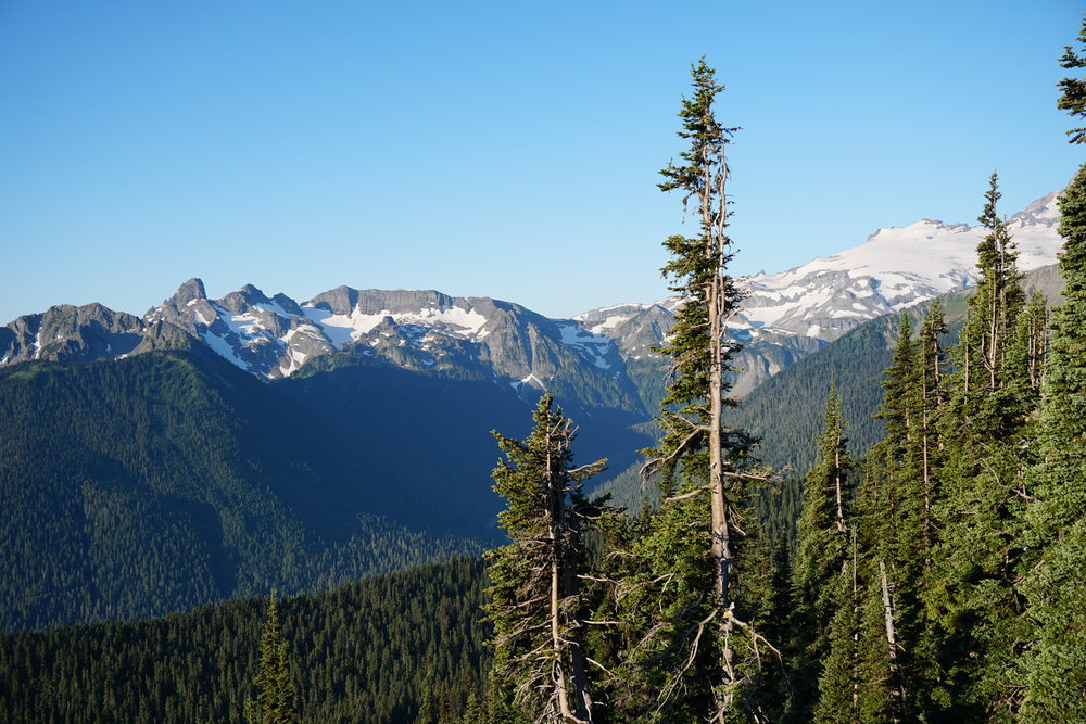 Mount Rainier National Park _ Anchor and Pine Collective