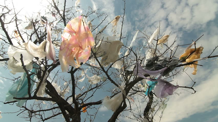 Plastic bags on trees