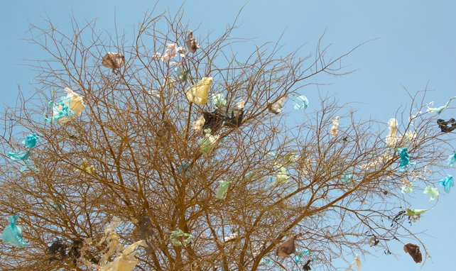 plastic-in-trees.jpg