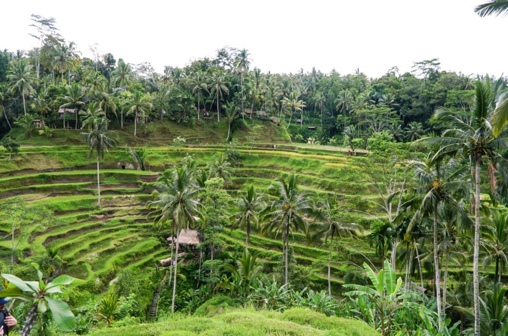 Happytrails.fi Olkinuora-Valkonen Bali ricefields