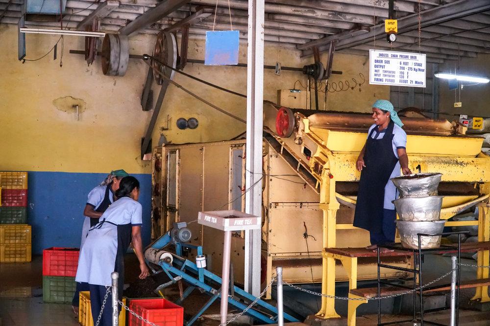 Fermentoituneet, koskeat teelehdet kuivataan tässä sata vuotta vanhassa koneessa, joka toimii perinteisellä puulla ja hiilellä. Huoneessa oli todella kuumaa ja koneesta tuli ulos kuivaa teetä.