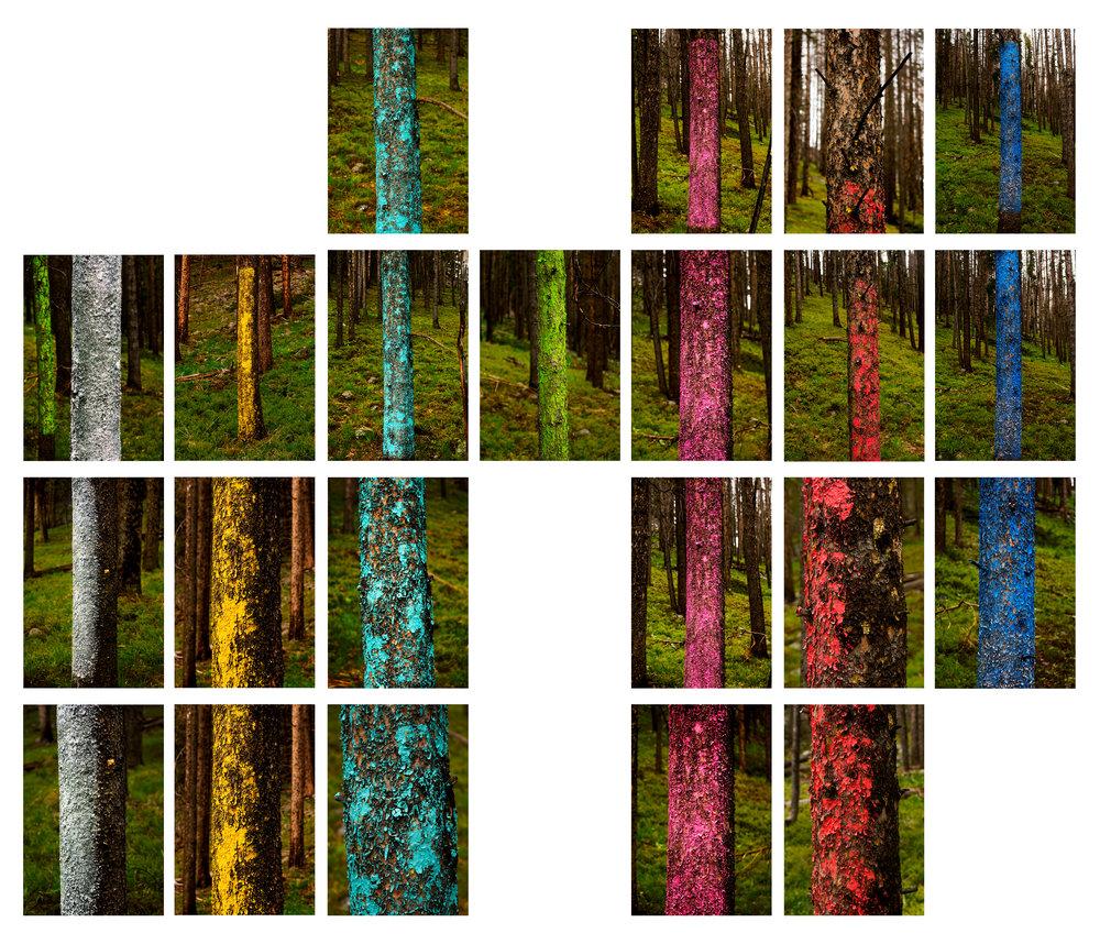 tree lines grid final.jpg