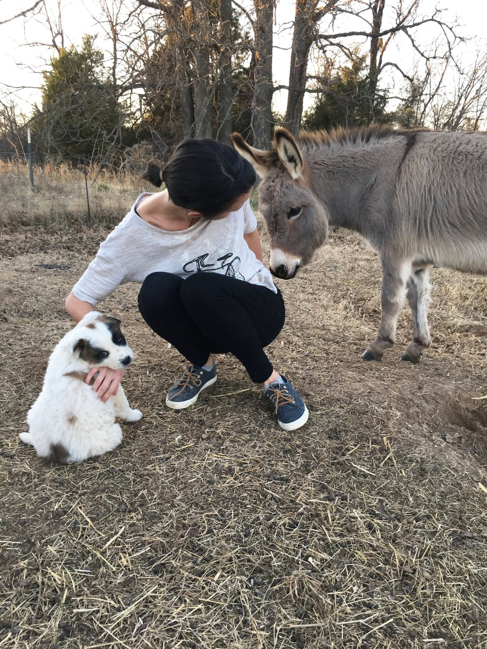 Have you met the donkeys at Carlton Landing? And the (now grown) puppy? They are such great greeters for the community!