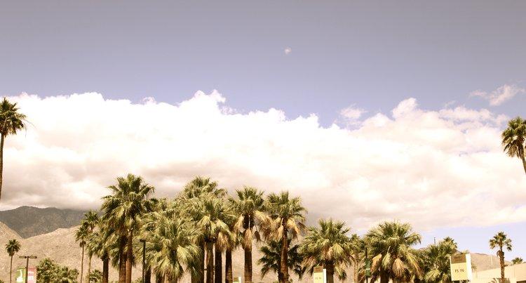 PALM+SPRINGS+by+Mandy+Zelinka-2.jpeg