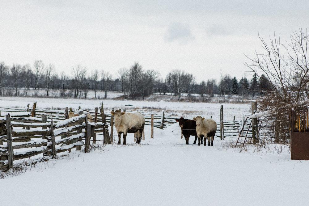 becker-farm-9.jpg