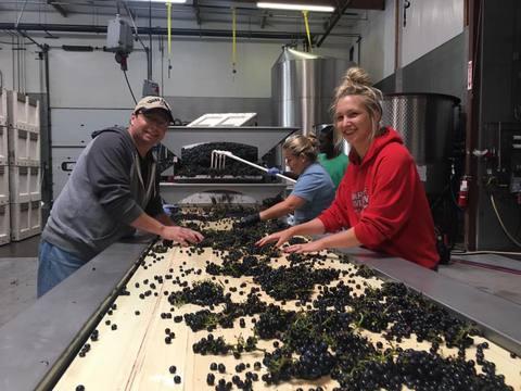 Dave Leonard & BreAnna Murphy sorting Pinot Noir