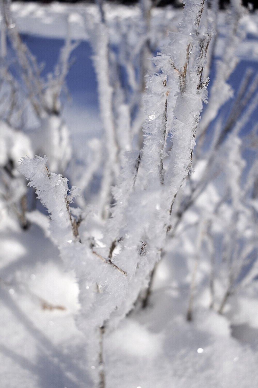 winter-twig.jpg
