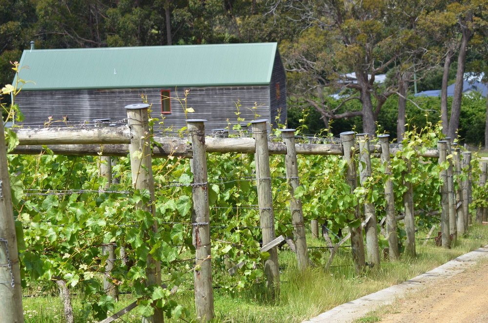 loft_amongst_the_vines_kettering_tasmania.jpg