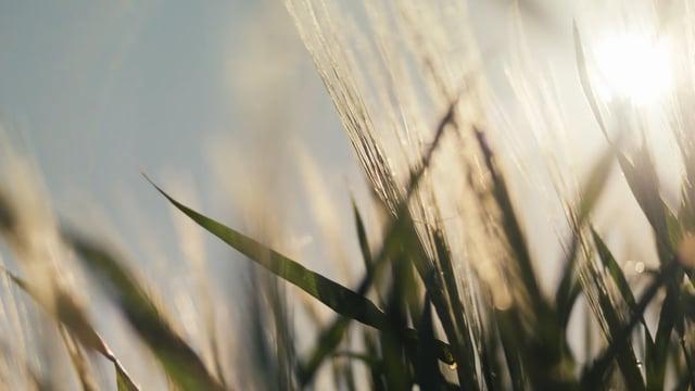 """Anheuser-Busch """"Impact For A Better World"""" — CAROLINE"""