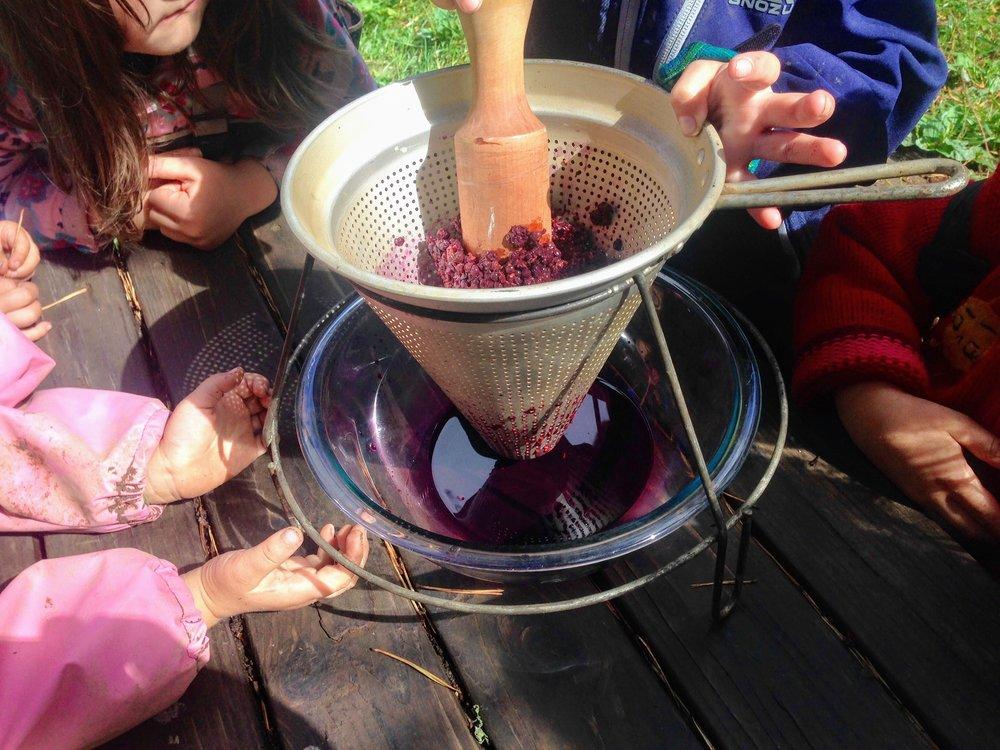 Making elderberry syrup