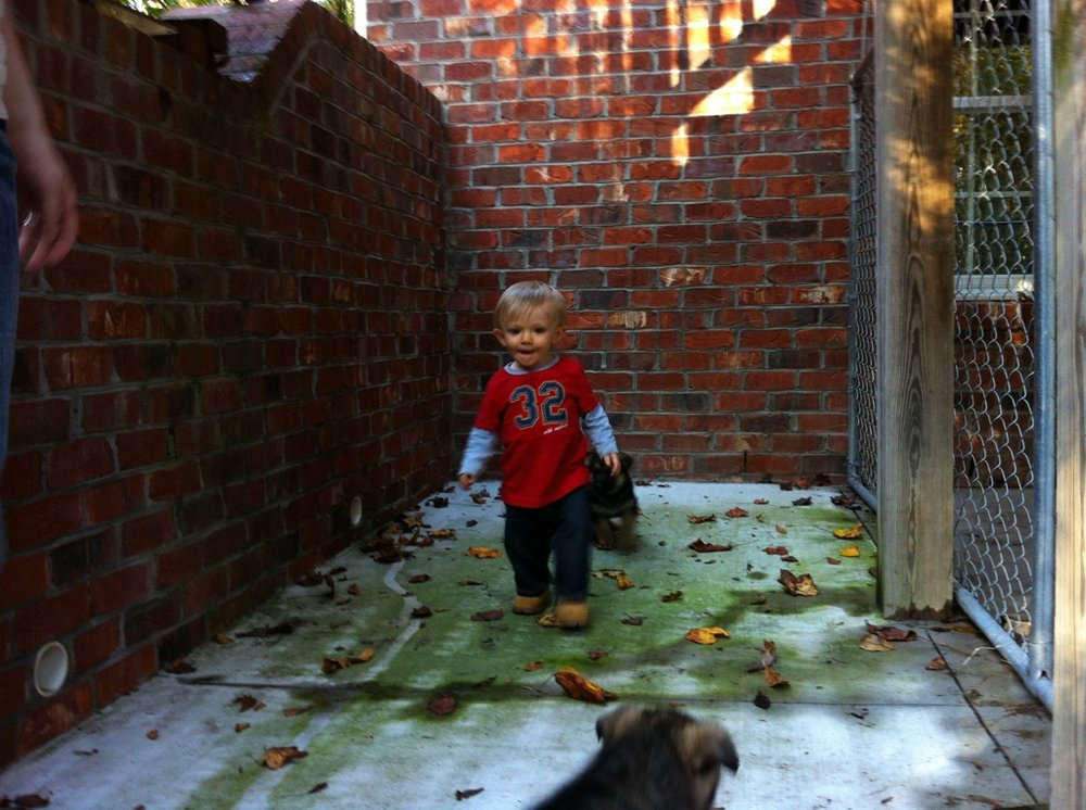 4TH generation - Boy meets dog. The reality is little man has always had a host of German Shepherds in his life. In this image he was sure-footed enough to walk and mindful enough to avoid stepping on puppies. Not sure if toddler is training puppies or if puppies are training toddler - either way great exposure for the older generations proudly smiling and cheering him on!