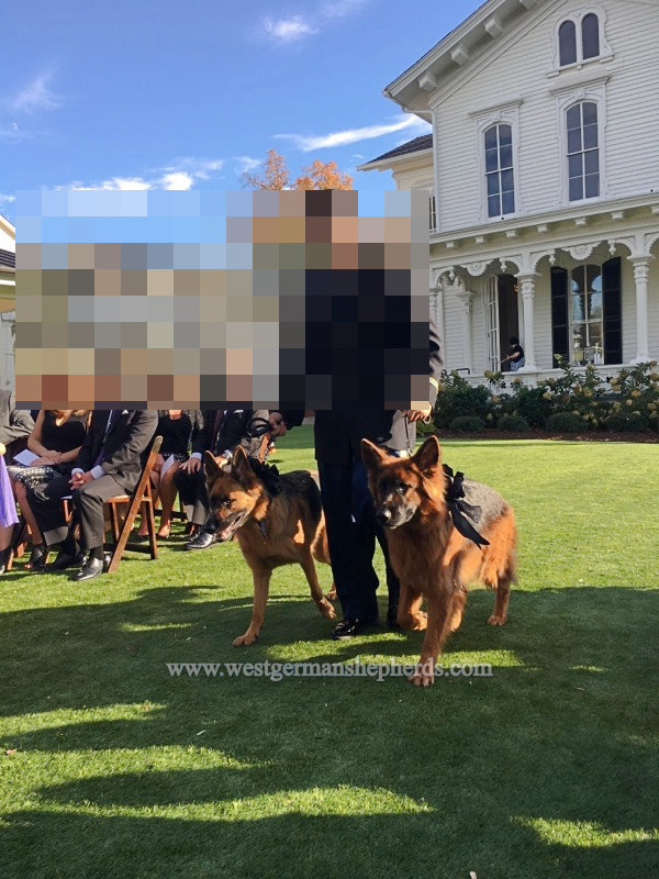 sisters sandy & osa serve as ring bearers at a wedding in florida,  facial images blurred to protect privacy